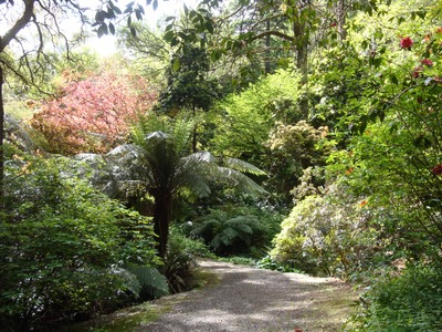 Mix of exotic trees and native tree ferns