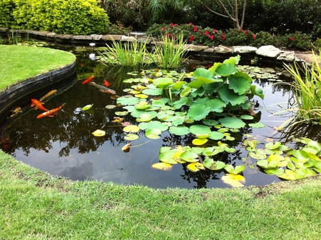 A small pond nearby elizabeth bay house sydney by wendy for Fish ponds sydney
